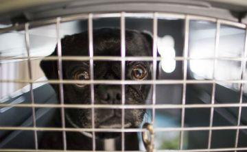 Celebran primera Conferencia Anual Pro Bienestar Animal