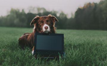 Videojuegos ayudan a los perros a mantenerse activos mentalmente