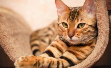 10 razones para esterilizar o castrar a tus mascotas