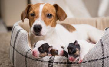 ¿Equivale un año humano a siete de un perro?