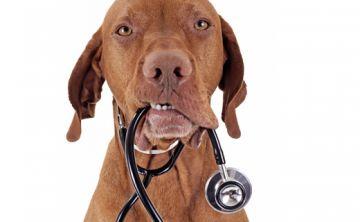 Enfermedades transmitidas por mascotas aumentan en verano