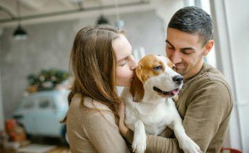 Las enfermedades que más afectan a los perros