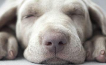 Vacuna a tu mascota