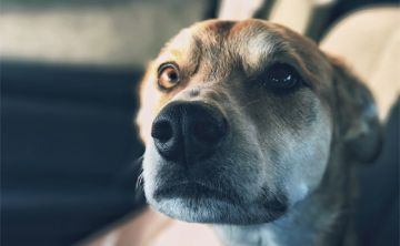 Un veterinario revela qué hacen las mascotas minutos antes de morir