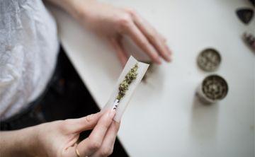 Identifican mecanismo por el que cannabis afecta a los circuitos neuronales