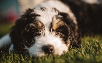 Estás poniendo triste a tu perro al estar tanto tiempo con el celular