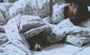 El buen dormir acelera la recuperación tras sufrir un golpe en el cerebro