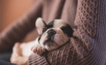 Protege a tu mascota de los efectos de la pirotecnia
