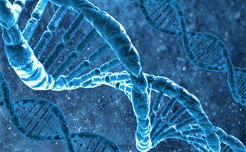 Científicos abren la puerta a restablecer la memoria en enfermos de alzhéimer