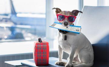 Los países más amigables con las mascotas viajeras