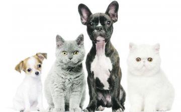 Un llamado a la compasión con los animalitos