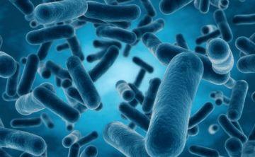 Las bacterias nadan juntas para alimentarse y ser más fuertes
