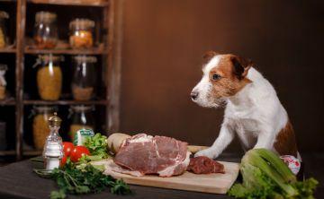 """Conoce todo sobre la dieta de """"comida natural"""" para las mascotas"""