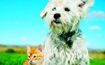 Perros y gatos: ¿cuáles son más inteligentes?