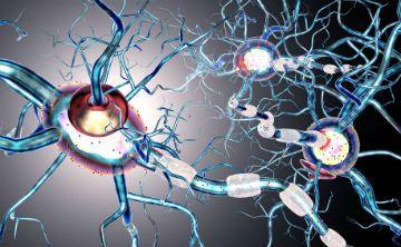 Un modelo matemático localiza el foco de las crisis epilépticas