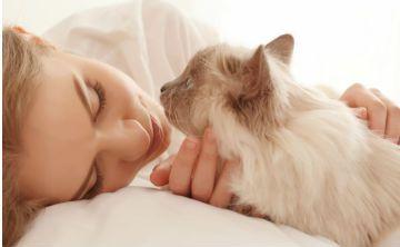 4 trucos para que tu gato no te despierte a la noche