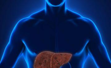 La acumulación de grasa en el hígado