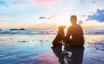 Exhortan a los dueños de animales protegerles contra los parásitos