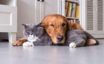5 tendencias de moda para las mascotas