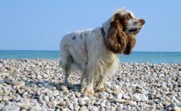 5 trucos para que los pelos de tus mascotas no te enloquezcan