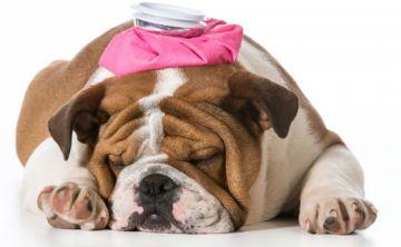 "FDA advierte riesgos de popular ""golosina"" para perros"