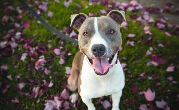 ¿Tu perro se rasca la cola continuamente? Te explicamos por qué