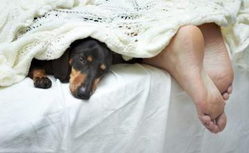 ¿Erramos al dormir con nuestros perros?