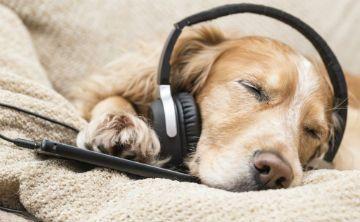 Radio alemana transmite música para calmar a los perros y que no se sientan solos