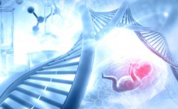 Un estudio vincula la placenta y el desarrollo de la esquizofrenia