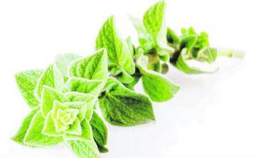 5 plantas para producir aceites esenciales